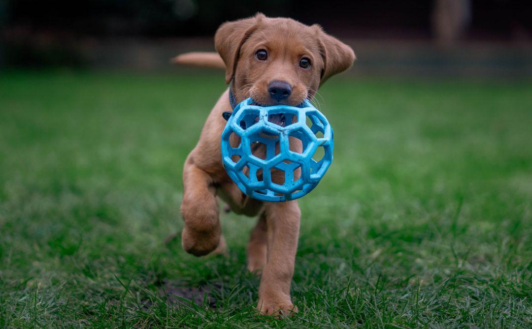 Los perros también pueden ser zurdos: 5 ejercicios para conocer cuál es su  pata preferente | Sociedad | Cadena SER