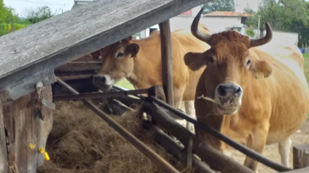 No toda la carne que consumimos impacta igual en el cambio climático