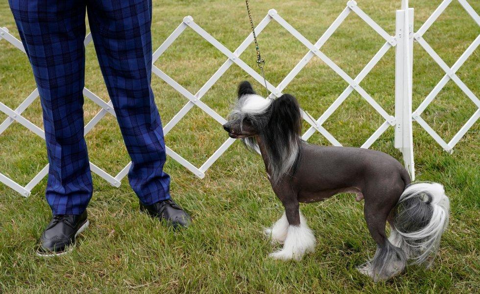 Así son los perros más guapos del mundo, según el concurso canino de Nueva York