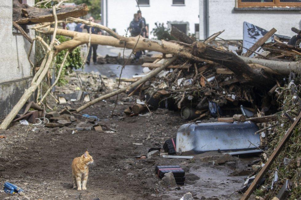 Un gato paseando por la zona de los escombros